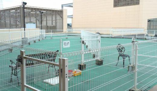 トレッサ横浜「ペット医療センター」ドッグラン